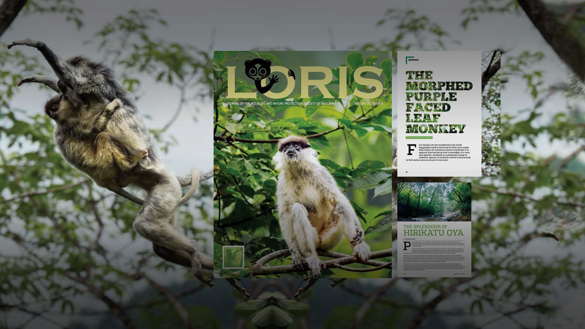 Loris Publication