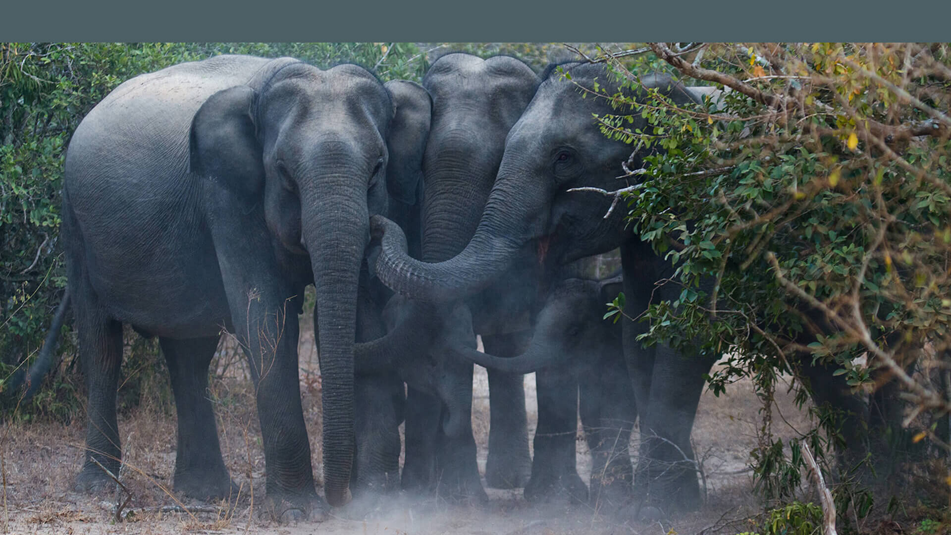 Covid 19; an unexpected windfall for Sri Lanka's wilderness and wildlife