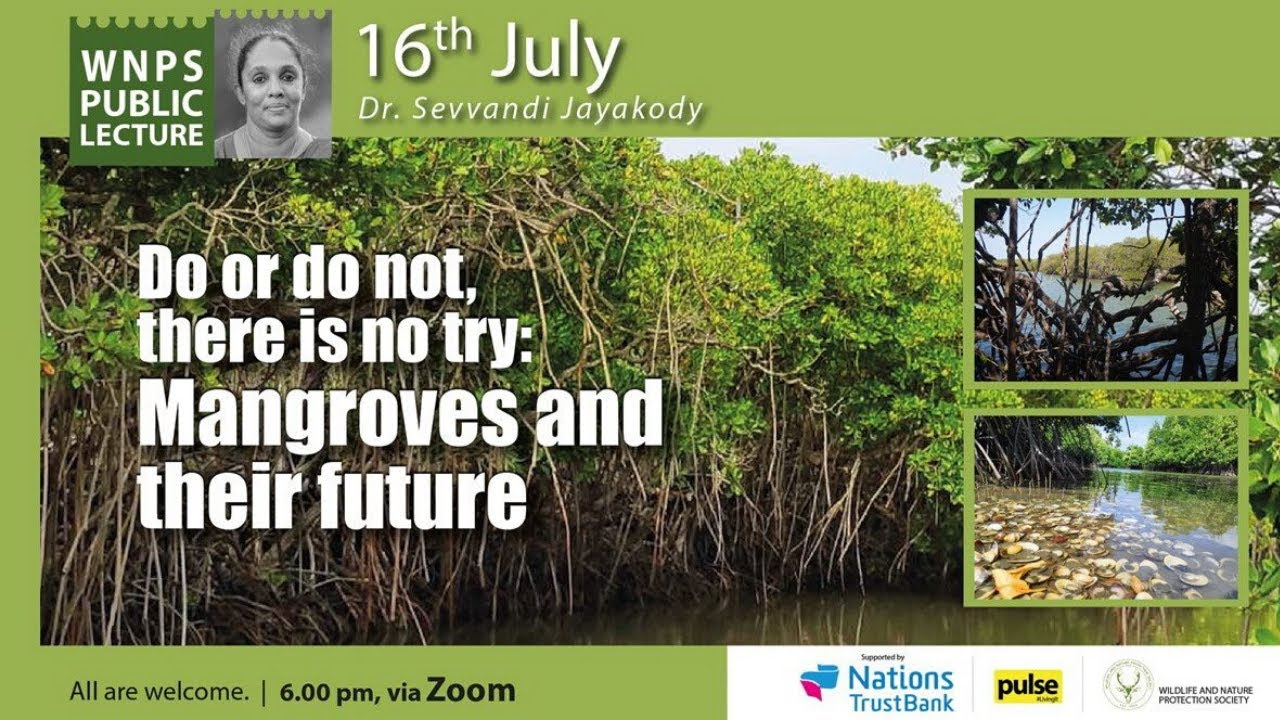 Mangroves and their future
