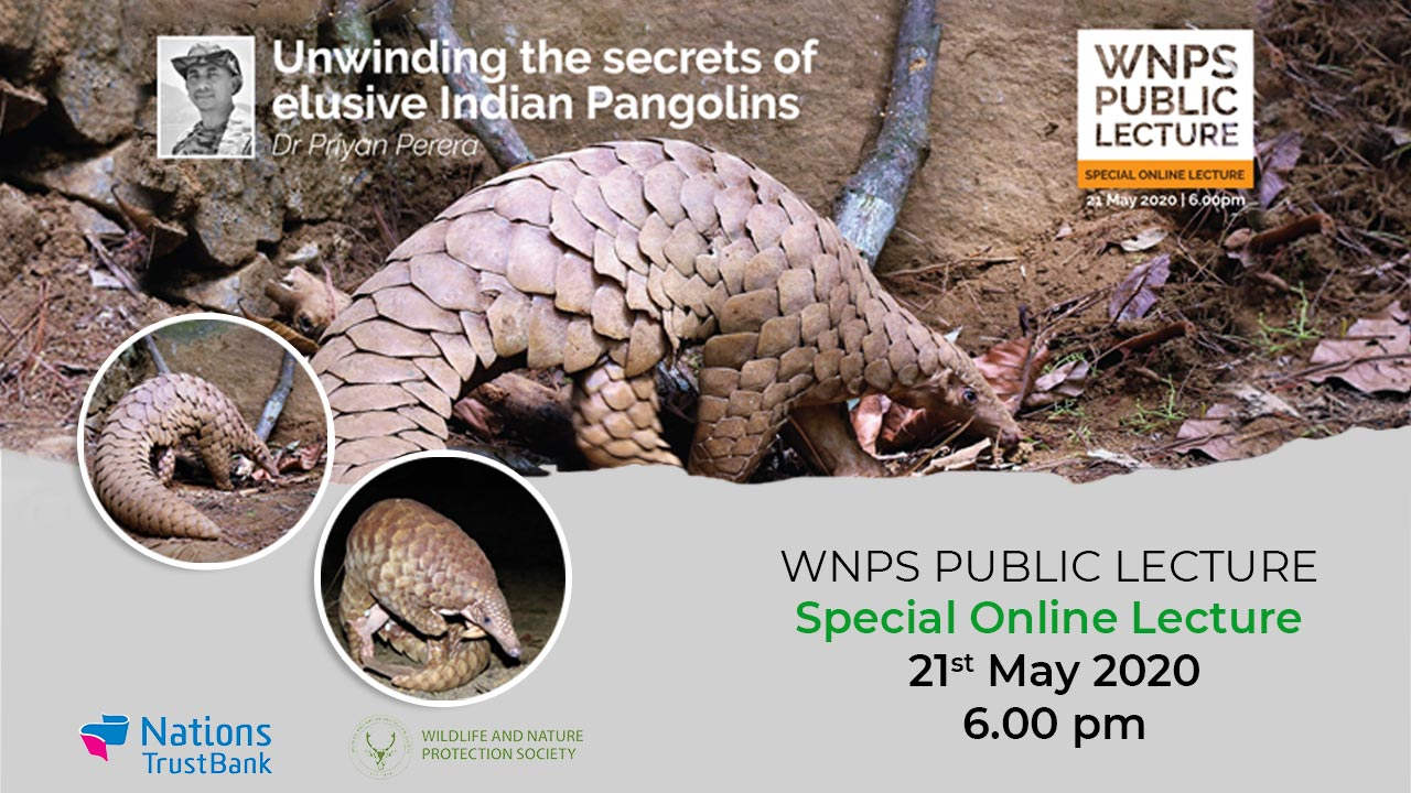 Unwinding the secrets of the elusive Indian Pangolin