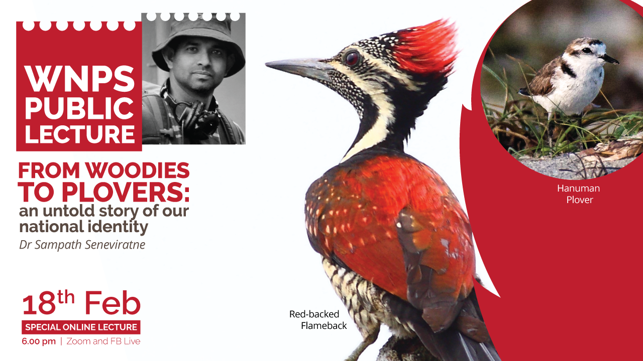 From Woodies to Plovers: an untold story of our national identity