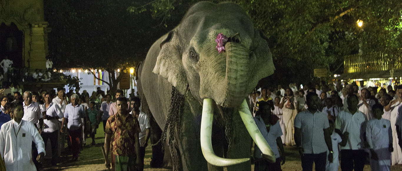 WHAT SRI LANKA NEEDS IS A STRATEGY TO CONSERVE OUR MAJESTIC SRI LANKAN ELEPHANTS, NOT PLANS TO TAME MORE ELEPHANTS AND HOLD THEM CAPTIVE.