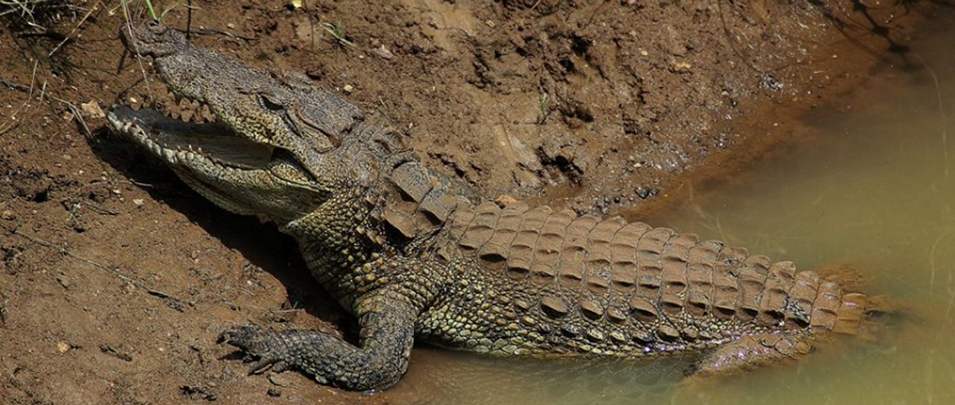 Crocodile risk warning boards in identified areas a must, says Wildlife and Nature Protection Society