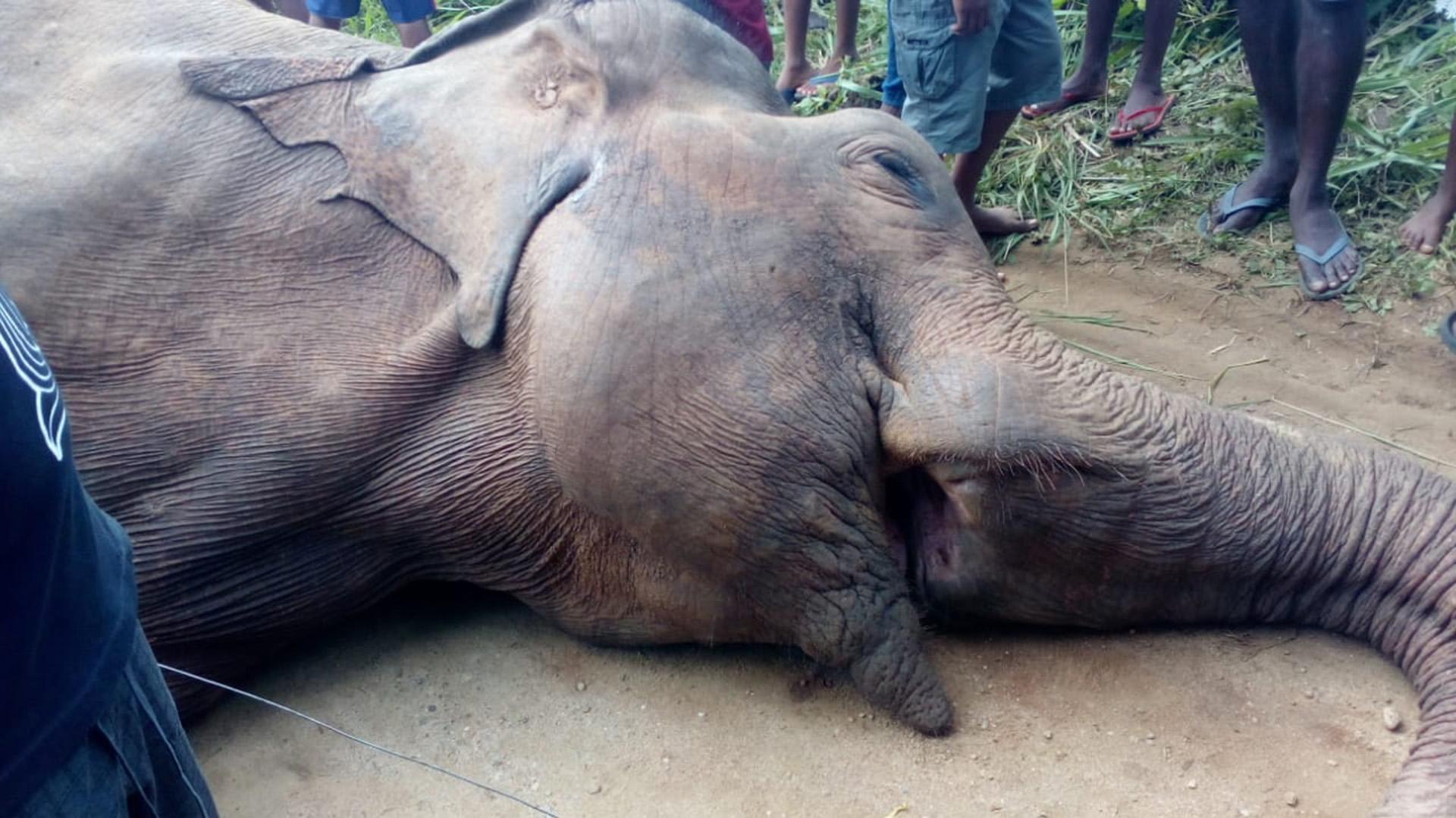National Elephant Policy
