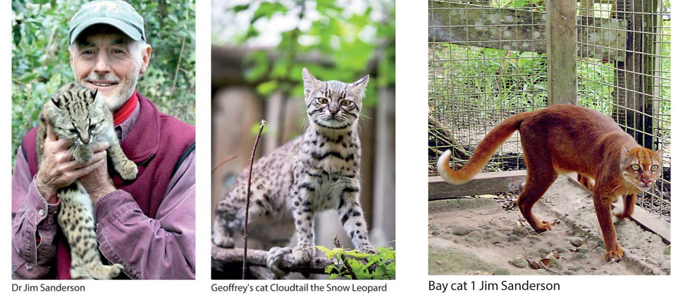 WNPS promotes small wild cat conservation
