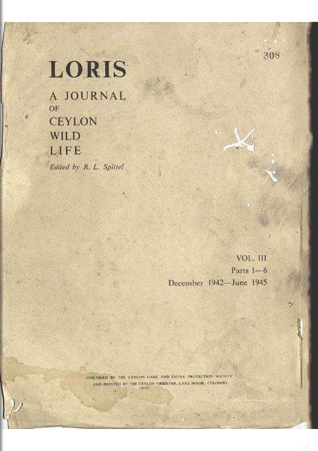 Loris
