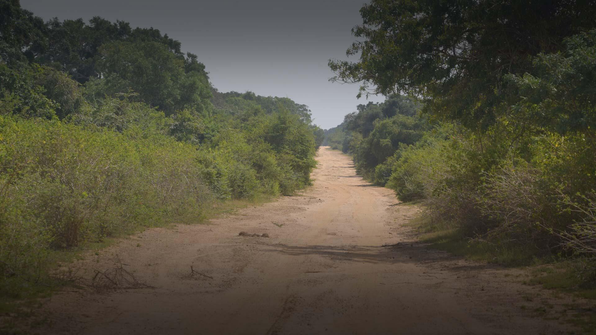 Wilpattu Road