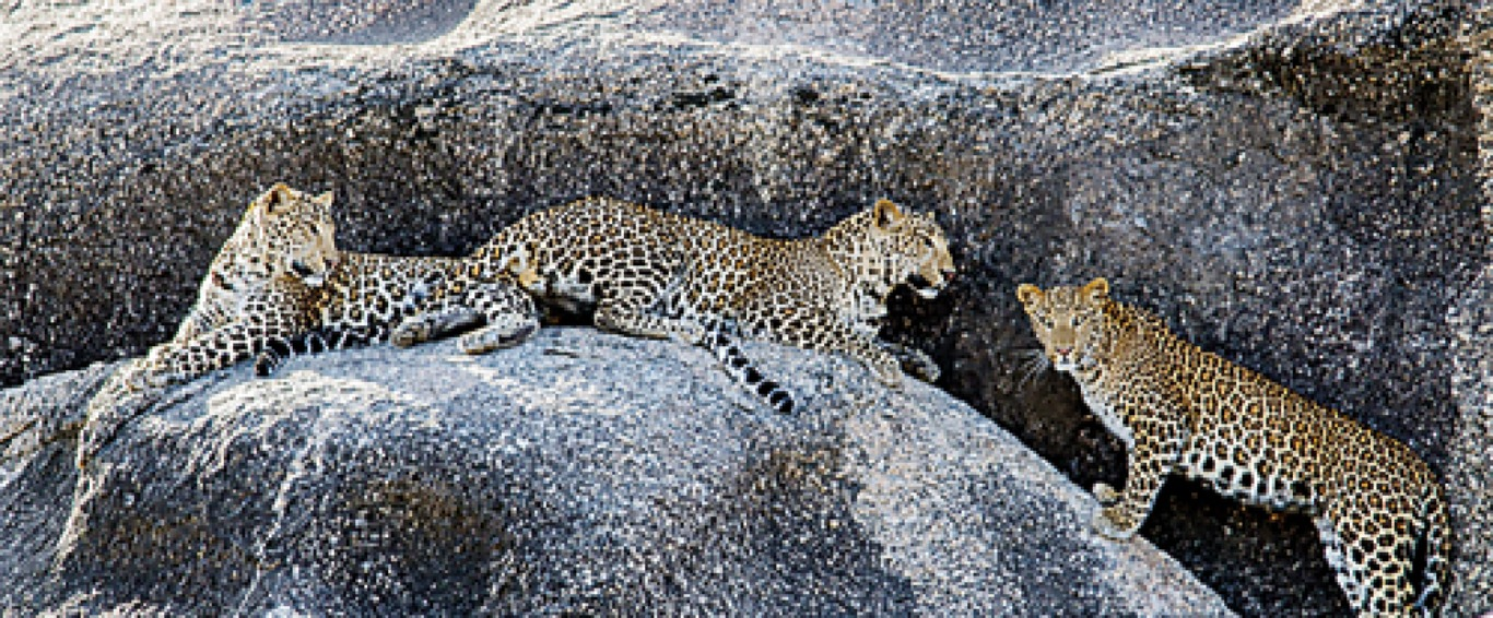 WNPS lecture: Co-existing with leopards
